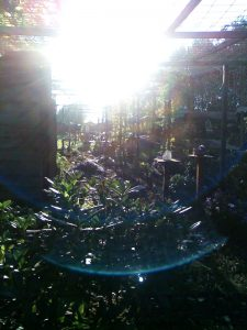 Merlijn orb in merlijn tuin